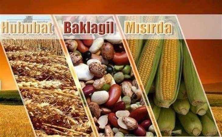 Aydın'da bitkisel üretim destekleri çiftçilere ödeniyor