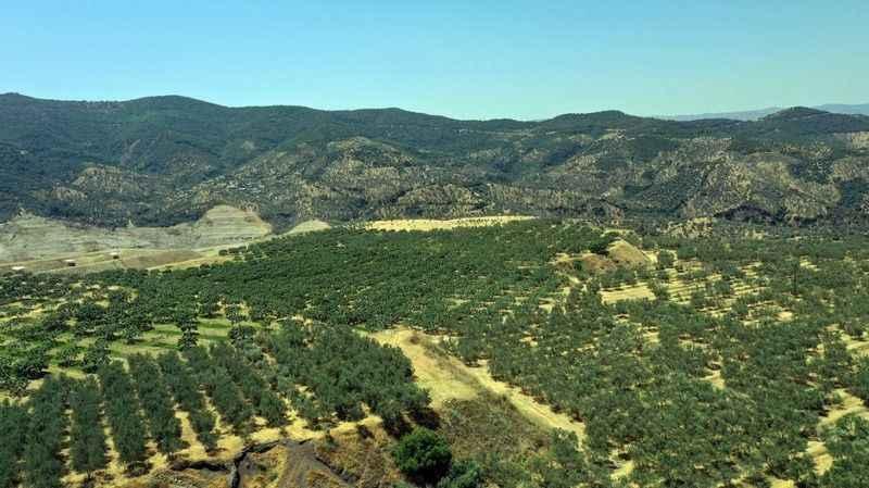 Kömür madeni sahasından 6 ülkeye zeytinyağı ihracatı