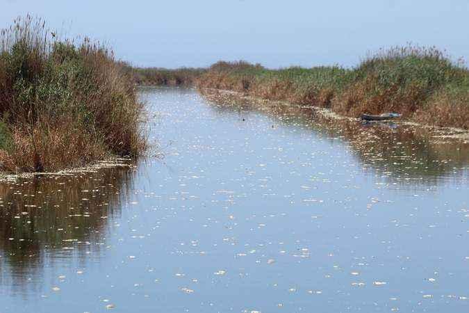 Aydın'da Büyük Menderes Nehri'ndeki toplu balık ölümlerine inceleme