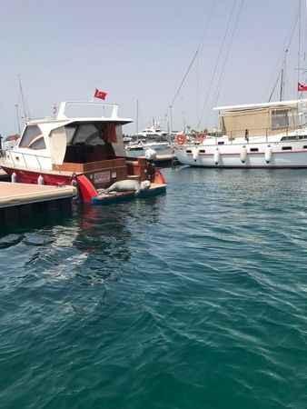 Didim'de bir Akdeniz foku