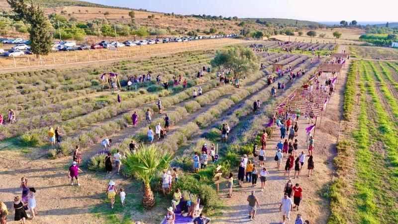 Lavanta tanıtım festivali büyüledi