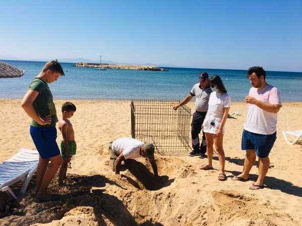 Deniz kaplumbağaları Didim'i sevdi