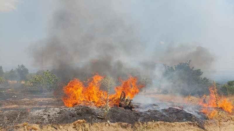 Orman yangınında 6 hektar ziraat alanı zarar gördü