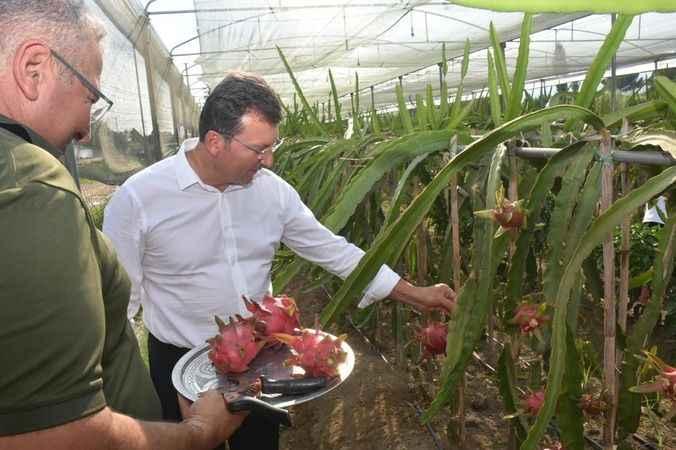 Kaymakam Şahin'in projesi meyvesini verdi