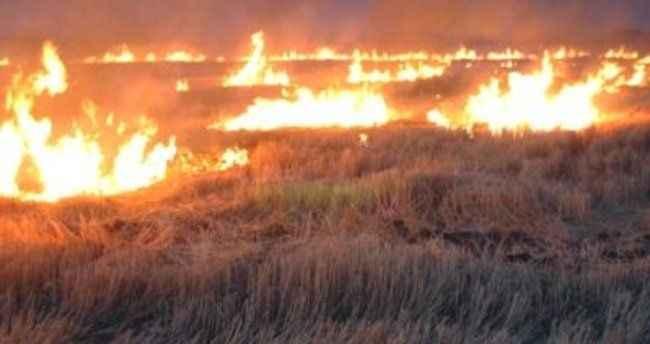 Anız yangınları doğayı yok ediyor