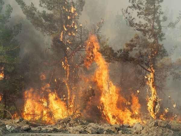 Bozdoğan'daki yangında son durum