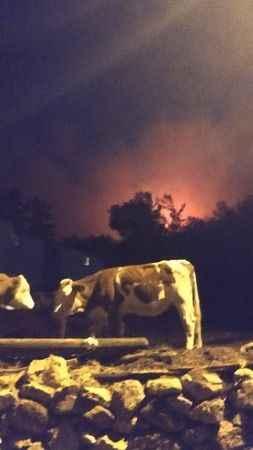 Yangından etkilenen hayvanlar için veteriner hekimler görev başında