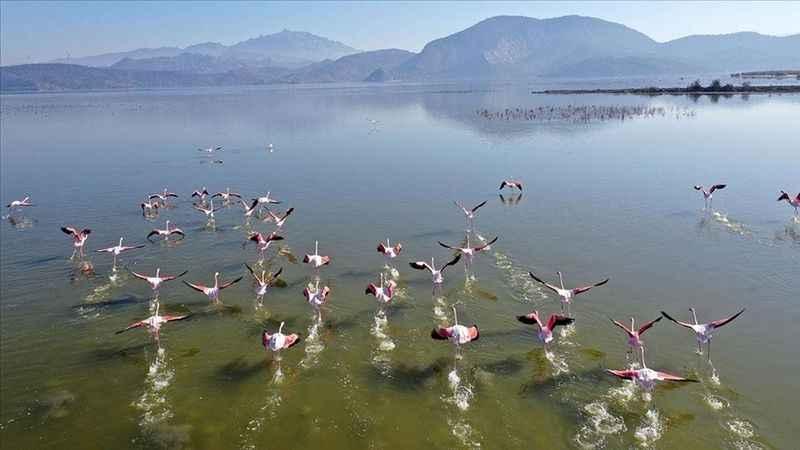 Bafa Gölü, 261 kuş türüne ev sahipliği yapıyor