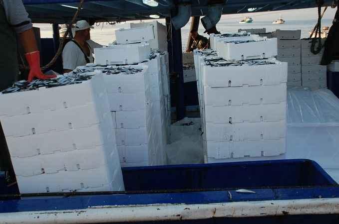 Didim'de 'Vira Bismillah' diyen balıkçılar kasaları doldurdu