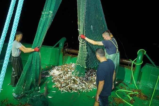 Aydın'da bin 500 ton balık avlandı