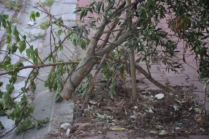 Karacasu'da ağaçlar bir bir kesiliyor