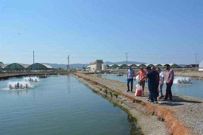 Muğla'daki su ürünleri tesisleri incelendi