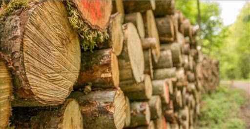 Foto kapana yakalandılar! Ormancı ve kerestecilere baskın: 17 gözaltı