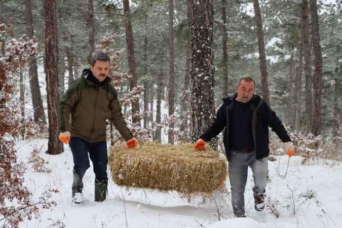 Sakarya'da yaban hayvanları için yem bırakıldı