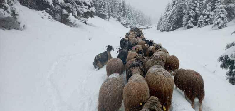 Sakarya'da yüksek kesimlere kar yağdı