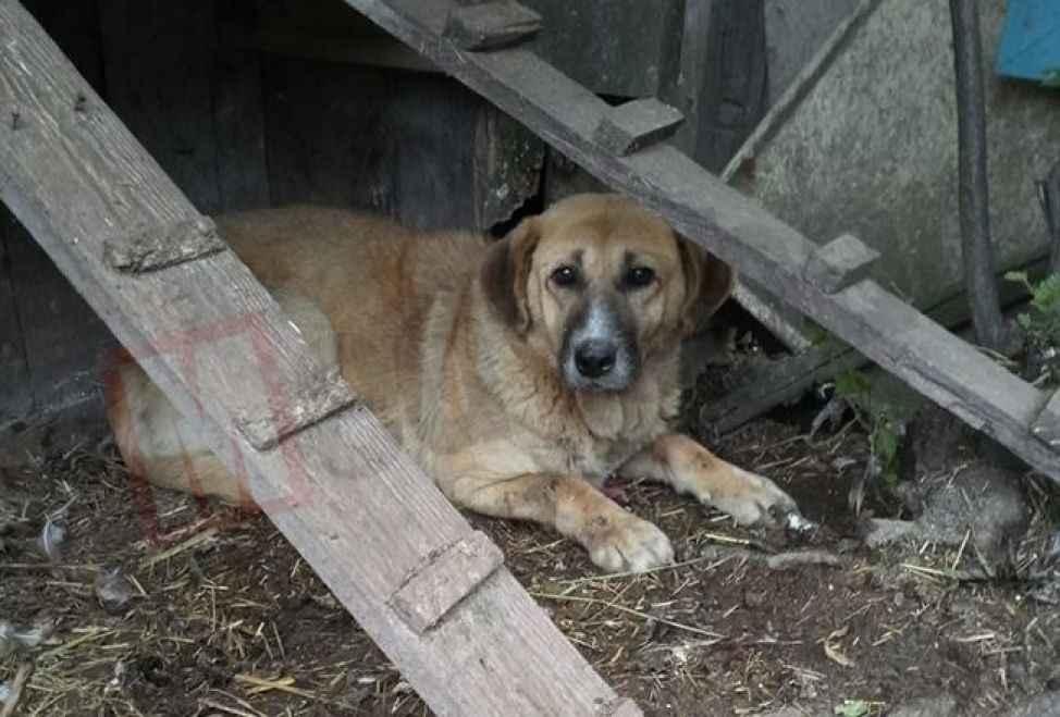 Başıboş köpek önce hepsini boğdu sonra oturup bekledi...