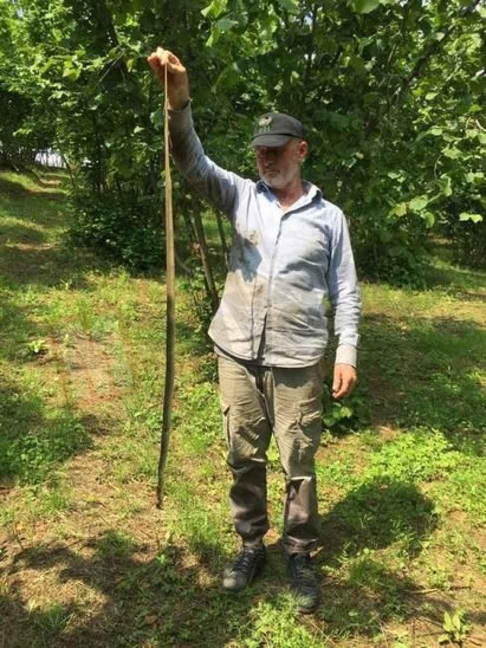 Fındık tarlasında boyu kadar yılan yakaladı