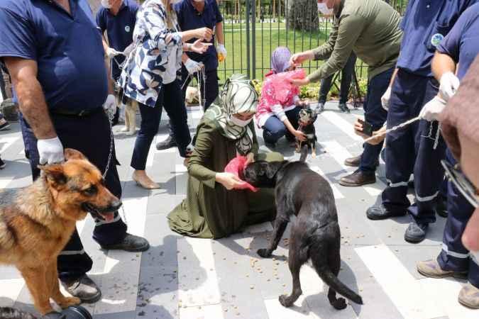 AK Parti'den sokak hayvanları için basın açıklaması