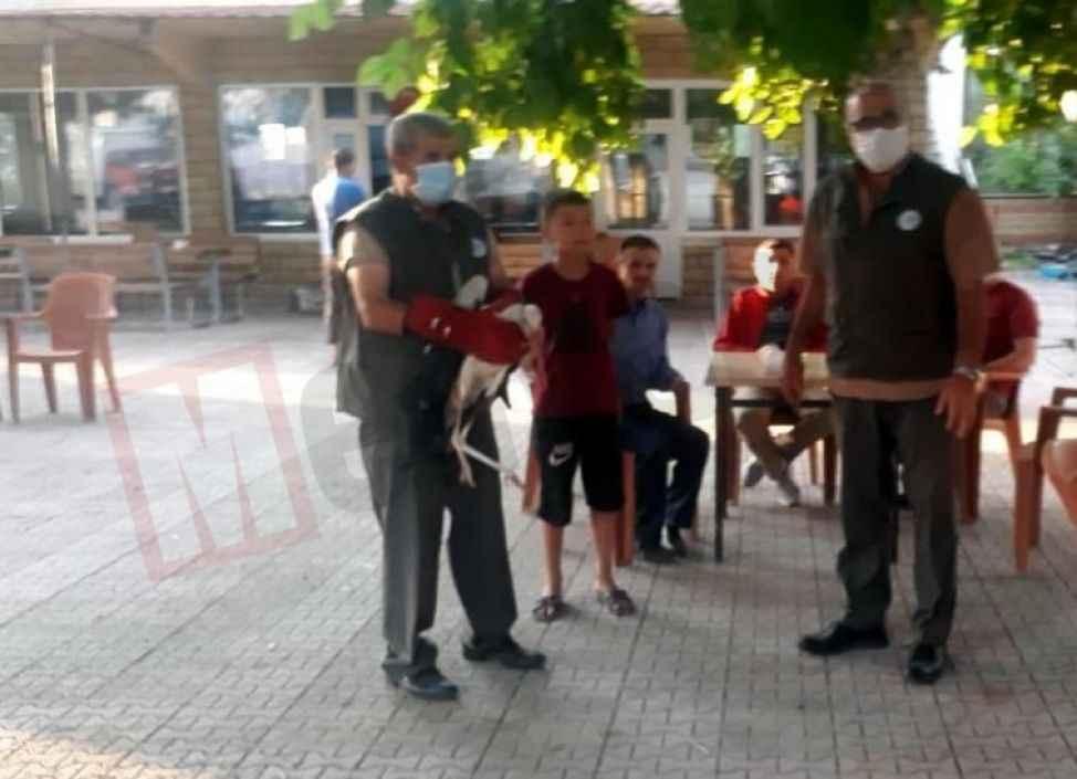 Köy meydanında bulunan leylek yetkililere teslim edildi