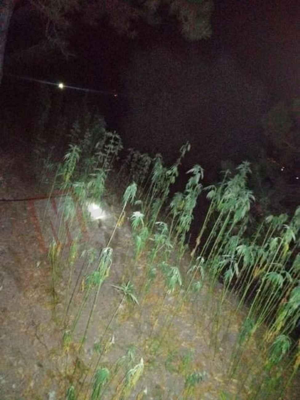 Geyve'de Jandarma'dan fotokapanlı uyuşturucu operasyonu!