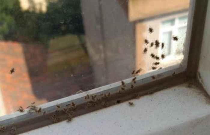 Komşuda 3 ilçeyi böcekler istila etti