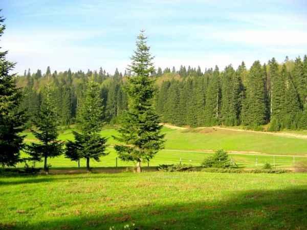 Düzce'nin yarısı ormanlık alan