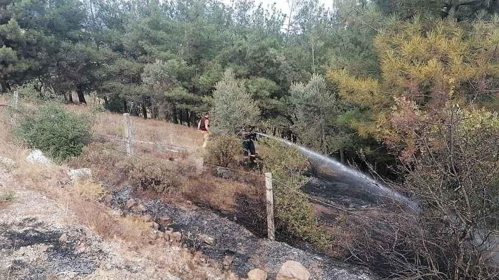 Pamukova'da ormanlık alanda yangın!