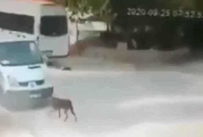 Ezdiği kedi can çekişirken bir kez daha üzerinden geçti