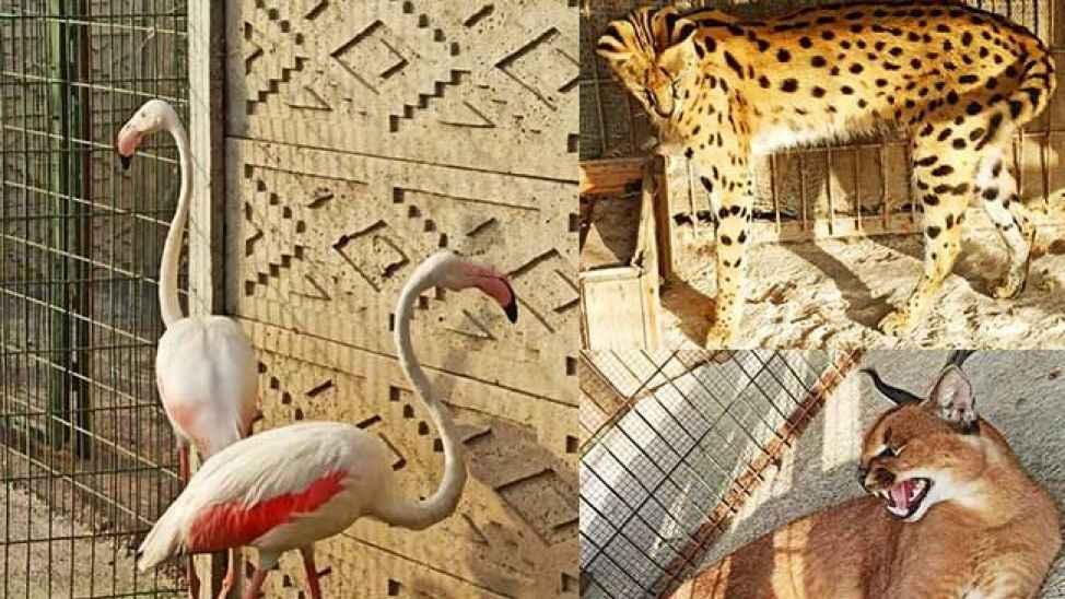 Adapazarı'nda kaçak hayvan operasyonu! Lama, flamingo, maymun ne ararsan var…
