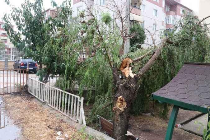 Kocaeli'de kuvvetli rüzgar ağaçları devirdi, yolları su bastı