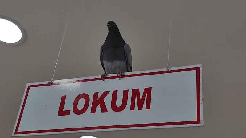 Sakarya'da kuruyemişçiye giren güvercinler çalışanlara zor anlar yaşattı