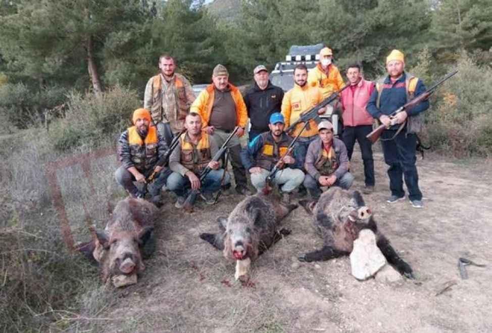 Tarlalarını domuzlar basınca avcılardan yardım istediler