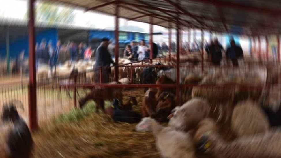 Erenlerdeki canlı hayvan pazarı da kapatıldı