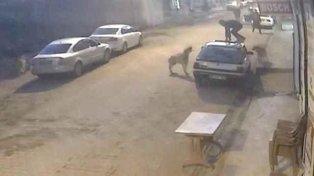 'Sokak hayvanlarının popülasyonda ciddi artış var'