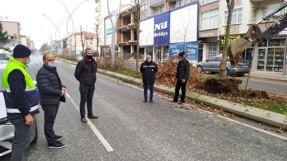 Karasu Belediyesi orta refüjdeki ağaçları söktü!