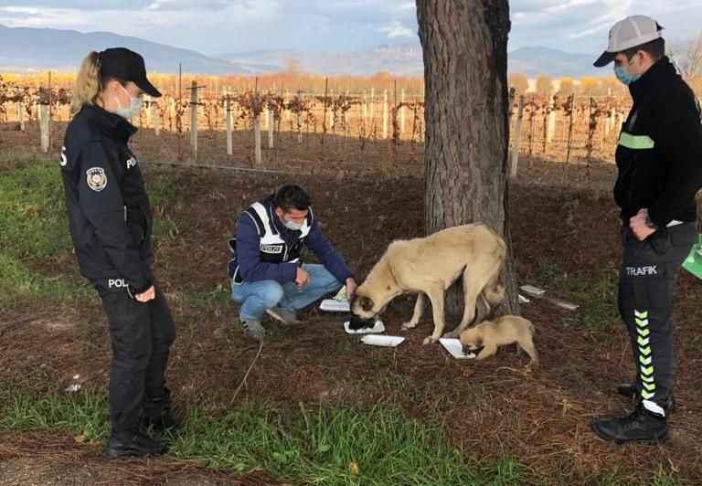 Pamukova polisinden sokak hayvanlarına şefkat eli