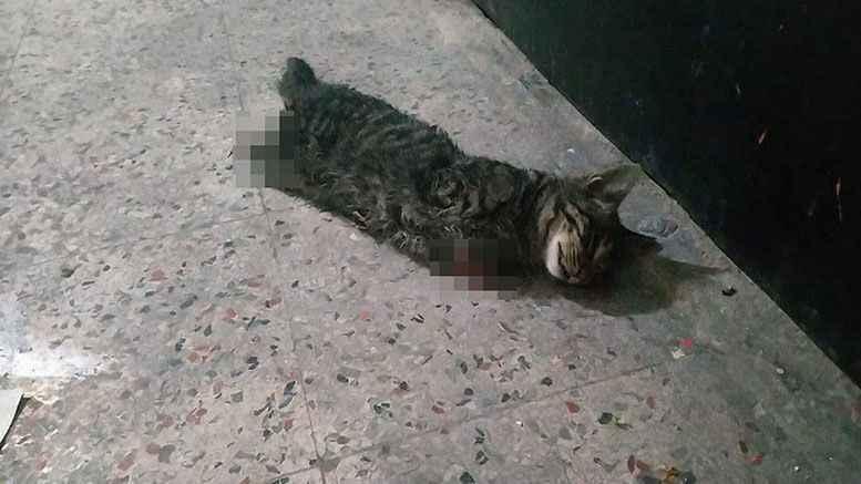 Komşu'da 4 bacağı kesilmiş kedi vahşeti!