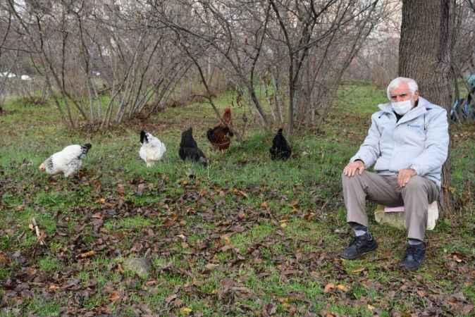 Pandemide dışarı çıkmaktansa tavuklarının yanında olmayı tercih ediyor