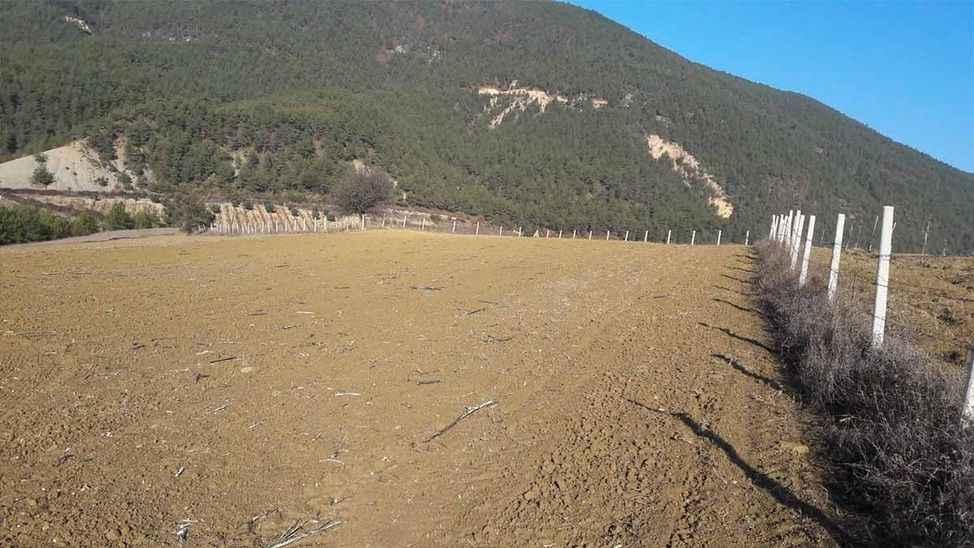 Geyve böyle kuraklık görmedi! Buğdaylar filiz vermedi...