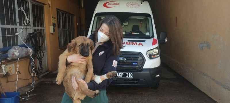 Yaralı yavru köpeğe ilk müdahale sağlık personelinden