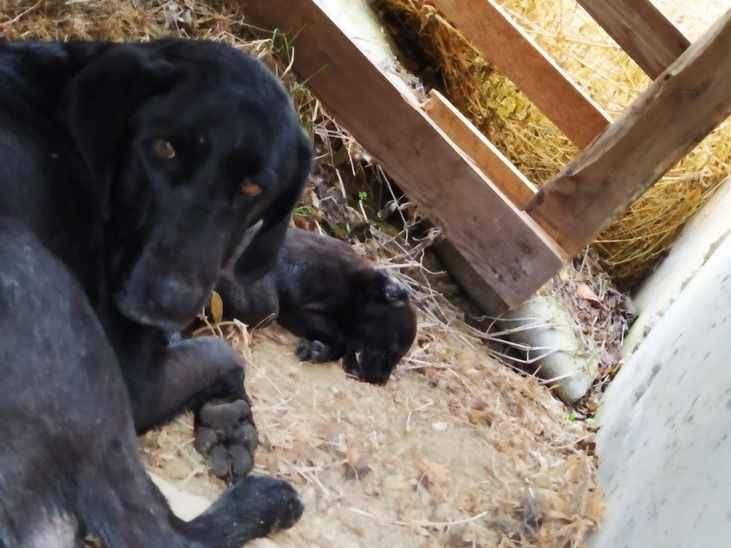 Taraklı'da yaralı halde bulunan kedi ve köpeğe belediye sahip çıktı