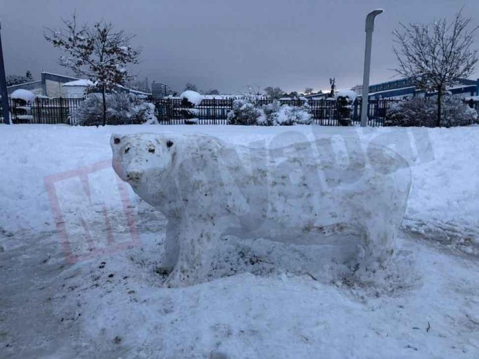 Kardan kutup ayısı yaptı, görenler gözlerine inanamadı