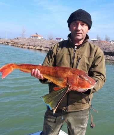 Barbun için attığı ağdan 5 kiloluk Kırlangıç balığı çıktı