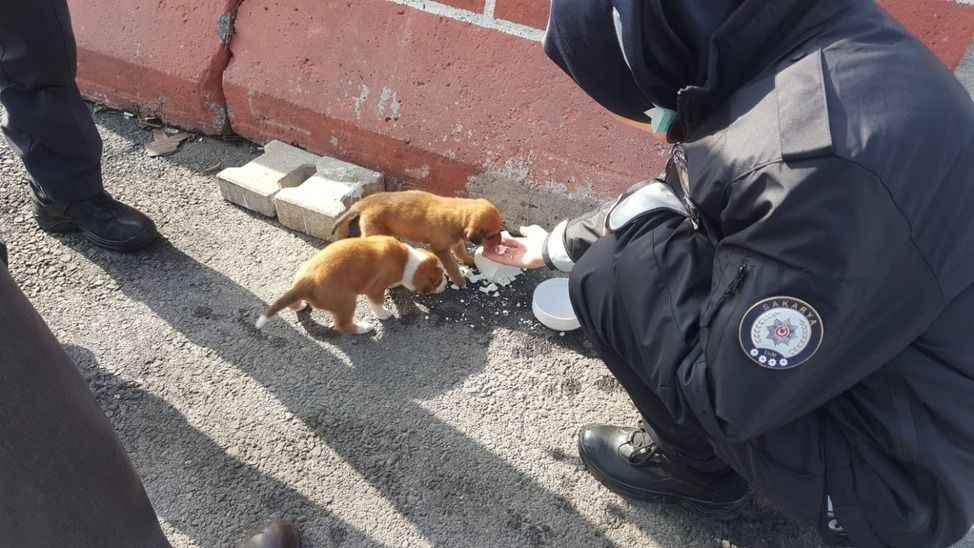Yolunu kaybeden yavrulara polis kucak açtı