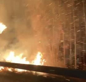 Temizlik için yakılan ateş kavaklığa sıçradı