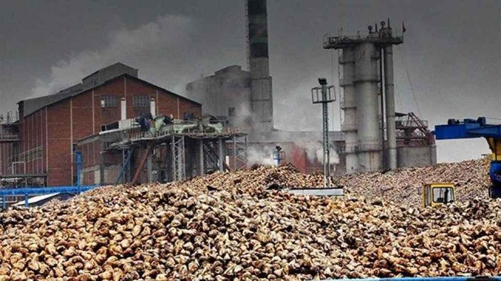 Şeker Fabrikasının kotası 65 bin 838 ton