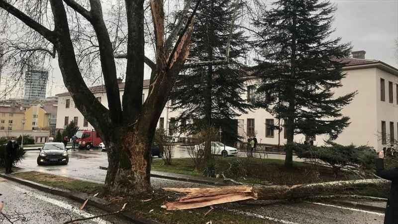 TBMM yerleşkesindeki bir ağaca yıldırım isabet etti