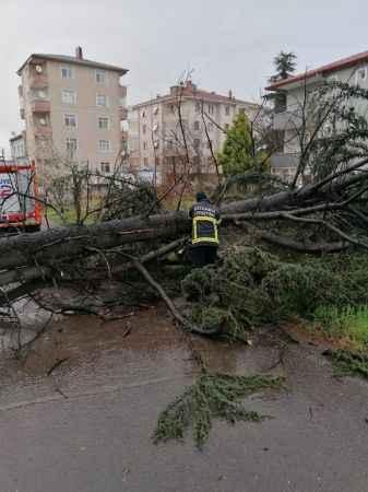 Komşuda şiddetli rüzgar ağacı devirdi