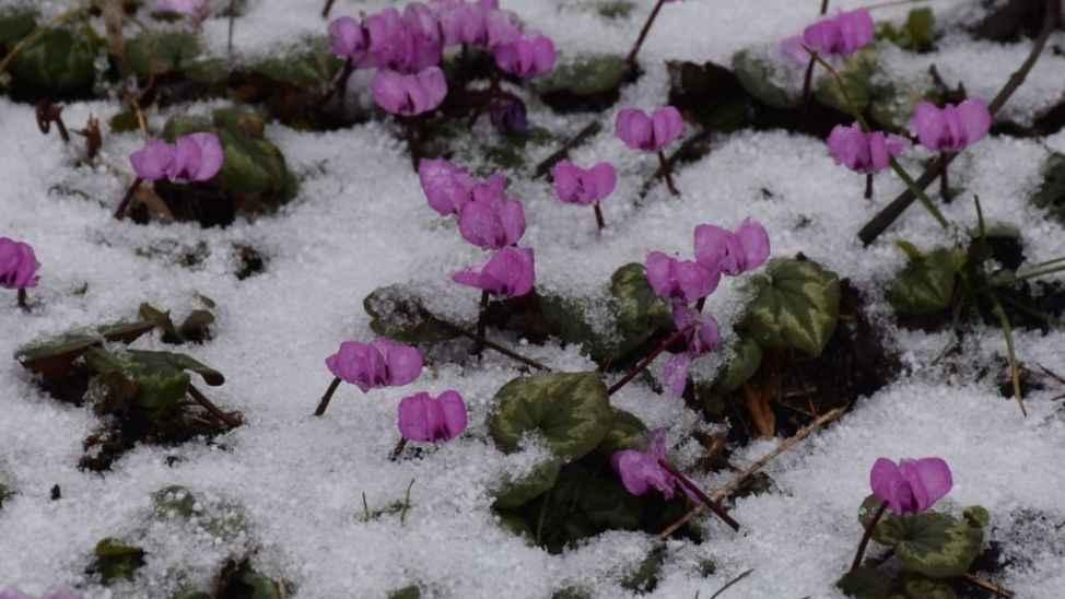 Zirvede kar yağışı başladı