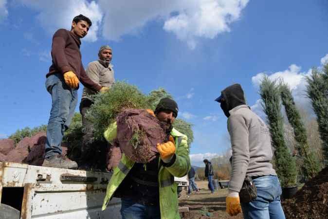 Sakarya Nehri'nin kıyısında ürettikleri fidanları Türk cumhuriyetlerine ihraç ediyorlar